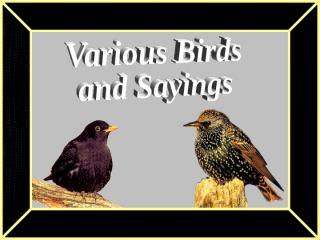 BirdsandSayings.pps