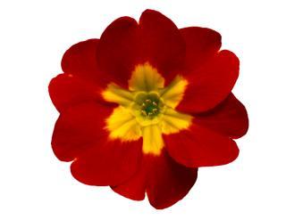 flores.doc