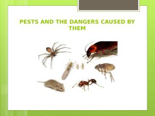 Eco-friendly pest control in Adelaide.pptx